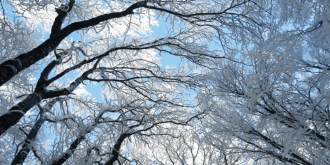 Wintry Branches
