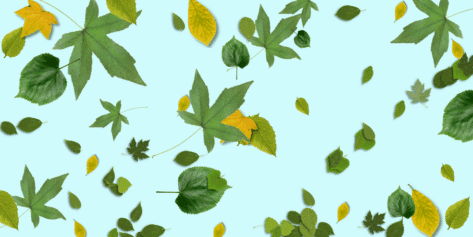 Scattered Green Leaves