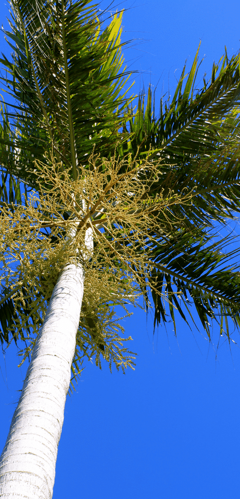 Young Palm Tree