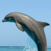 Splashing Dolphin
