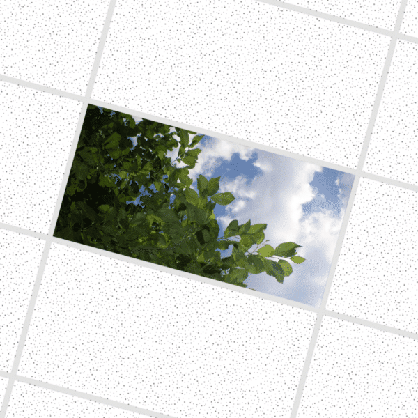 Sky Through The Leaves